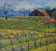 Grape Vineyard Originals - Napa Barn by Sam Pearson