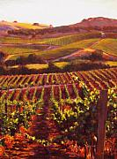 Contry Prints - Napa Carneros Summer Evening Light Print by Takayuki Harada