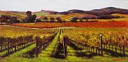 Contry Prints - Napa Carneros Vineyard Autumn Color Print by Takayuki Harada