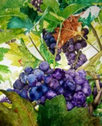 Grapes Paintings - Napa Harvest by Lance Gebhardt