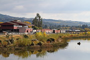 Boxcar Photos - Napa River in Napa California Wine Country by Wingsdomain Art and Photography