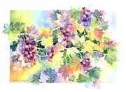Grape Vine Posters - Napa Valley Morning Poster by Deborah Ronglien