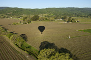 Napa Valley Vineyard Prints - Napa Valley, Usa Hot Air Balloon Flying Print by Keenpress
