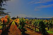 Napa Digital Art Prints - Napa Valley  Print by Vijay Sharon Govender