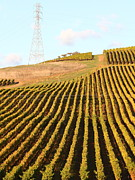 Vineyards Photos - Napa Valley Vineyard . 7D9065 by Wingsdomain Art and Photography