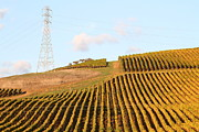 Napa Valley Vineyard . 7d9066 Print by Wingsdomain Art and Photography