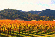 Vineyard Art Digital Art Posters - Napa Valley Vineyard in Autumn Colors Poster by Wingsdomain Art and Photography