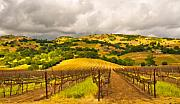 Vineyard Landscape Digital Art Prints - Napa Valley Vineyard Print by Mick Burkey