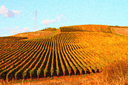 Vineyard Art Digital Art Posters - Napa Valley Vineyard Poster by Wingsdomain Art and Photography