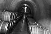 Wine Cellar Metal Prints - Napa Wine Barrels in Cellar Metal Print by Shane Kelly