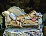 Sleeping Mixed Media - Napping Dog Promo by Edward Sobuta