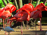 Flamingoes Art - Napping flamingoes by Vijay Sharon Govender