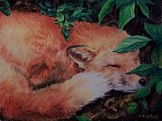Fox Pastels Prints - Napping Fox Print by Donna Teleis