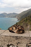 Cat Nap Prints - Napping in Paradise Print by Mike Reid