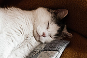Soft Fur Photos - Napping by Mandy Tabatt