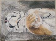 Tiger Pastels - Napping by Maris Sherwood
