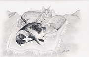 Animals Drawings - Napping by Sherri Strikwerda