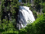 Mt Rainier Photos - Narada Falls through the Trees by Charles Robinson