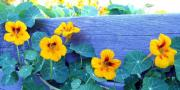Upbeat Prints - Nasturtium Box Print by Will Borden