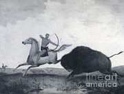 American Buffalo Posters - Native American Indian Buffalo Hunting Poster by Photo Researchers