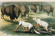 American Buffalo Posters - Native American Indians Camouflaged Poster by Photo Researchers