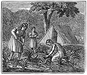 1835 Photos - Native American Women Farming, 1835 by Granger