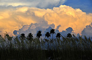 Sea Oats Photo Framed Prints - Native Florida Framed Print by David Lee Thompson