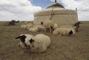 Herders Prints - Native Housing, Felt Tent, Or Yurt Print by James L. Stanfield