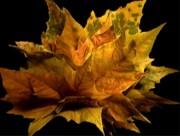 Orange Prints - Natural Autumn Sculpture Print by Navo Art
