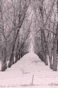 Hall Way Photos - Natural Cathedral by Julie Lueders