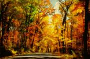 Autumn Country Road Posters - Natural Cathedral Poster by Lois Bryan