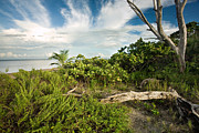 Caribbean Sea Framed Prints - Natural Florida Coastline Framed Print by Matt Tilghman