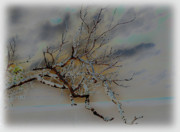 Natural Inversion -1 Print by Amanda Vouglas