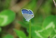 Insects Photos - Natural Lace  by Neal  Eslinger