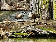 Canada Goose Photos - Natural Landscape by Scott Hovind