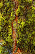 Tree Bark Photos - Natural Life by Jeffrey Campbell