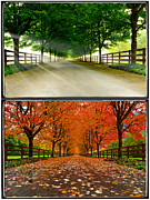 Driveway Photos - Natural progression by Dan Mihai