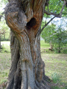 Tree Huggers Prints - Natural Tree Hugger Print by Joy Tudor