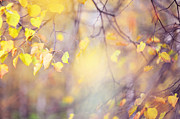 Forest Light Photos - Natural Watercolor of Autumn by Jenny Rainbow