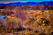 Snow Prints - Nature at its best in South Platte Park Print by David Patterson