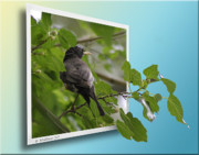 Sfx Photo Prints - Nature Bird Print by Brian Wallace