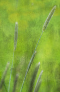 Green Foliage Mixed Media Posters - Nature Impression Poster by Angela Doelling AD DESIGN Photo and PhotoArt