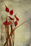 Red Leaves Photos - Nature Morte Du Moment by Aimelle