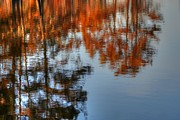 Autumn Photographs Photos - Nature Reflection by Ester  Rogers