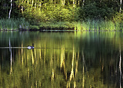 Northeastern Photos - Nature Reflection by Paul St George