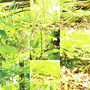 Photo Grids Art - Nature Scape 001 by Robert Glover