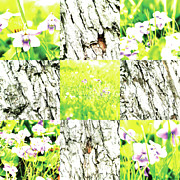 Photo Collage Prints - Nature Scape 002 Print by Robert Glover