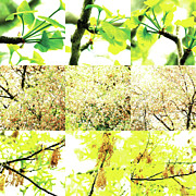 Photo Collage Prints - Nature Scape 003 Print by Robert Glover
