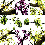 Photo Collage Prints - Nature Scape 004 Print by Robert Glover