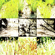 Photo Collage Prints - Nature Scape 005 Print by Robert Glover
